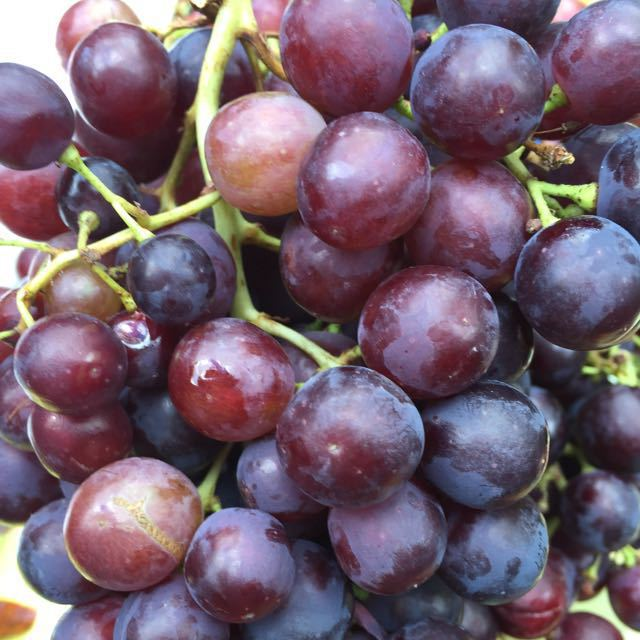 Bumper crop of grapes