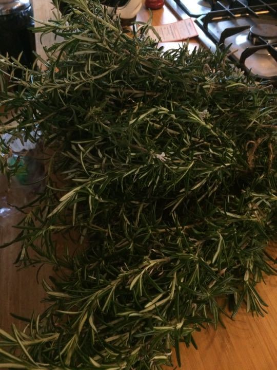 Freshly cut Rosemary from the garden
