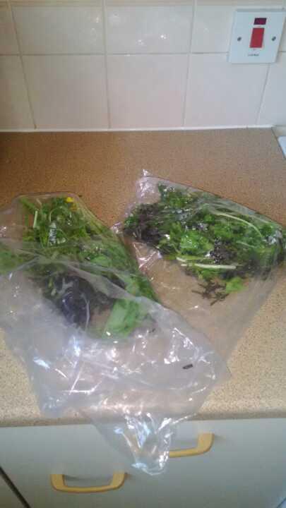 Free organic rocket salad