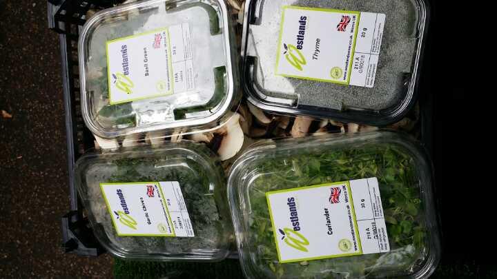 micro leaf salad herbs