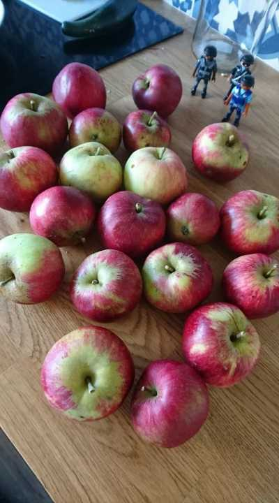 Lovely, juicy red apples. Mix of two types from our trees