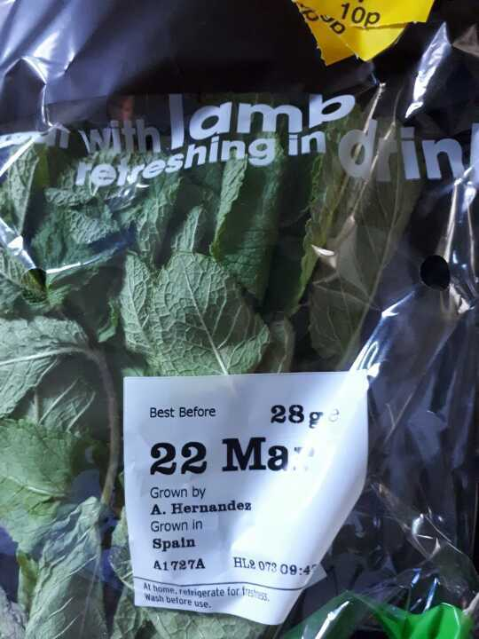 Mint (Great for pimms and Lamb)