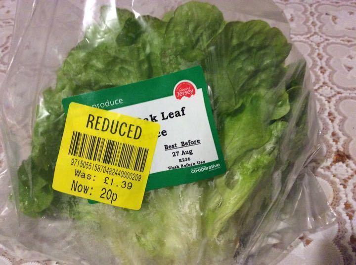 White oak lettuce