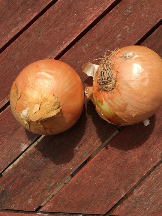 2 large onions