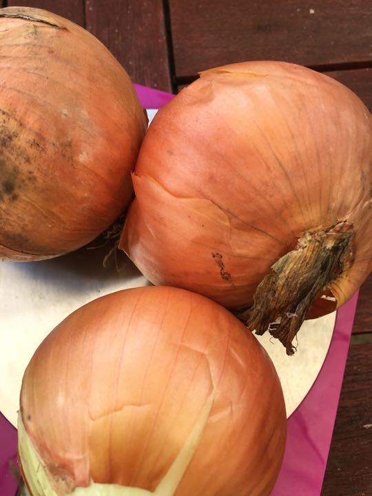 Set of 3 onions