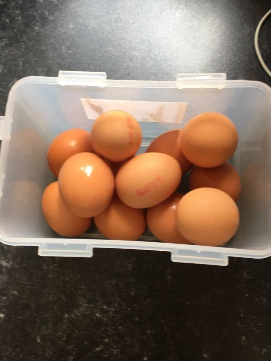 X2 lots of 6 eggs 1 lot per family request)