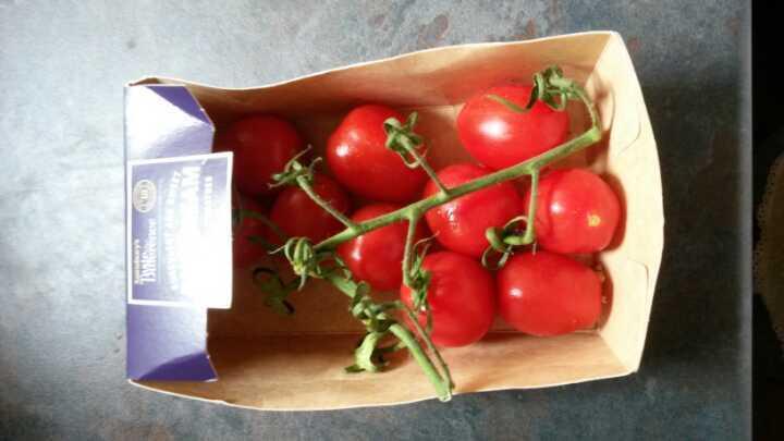 Sun dream vine tomatoes