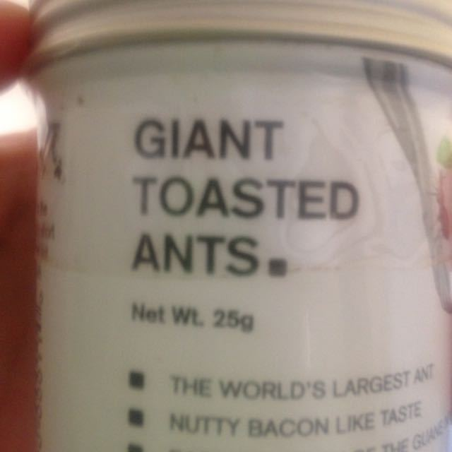 Giant toasted ants