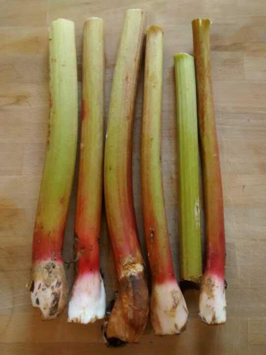 Rhubarb - 6 sticks