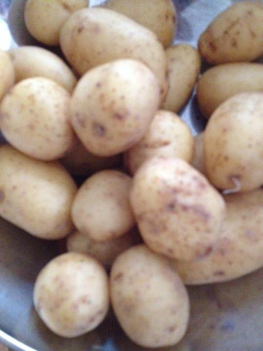 Mini potatoes 750g X 7 bags