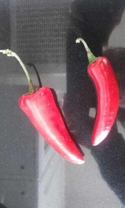 Two chillis left over