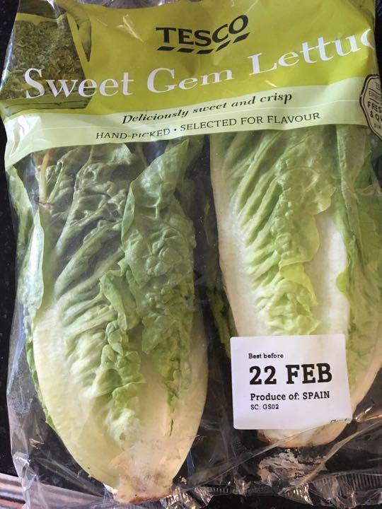 Sweet gem lettuce