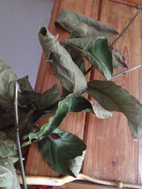 Bay leaves, lots, you can have as many as you want.