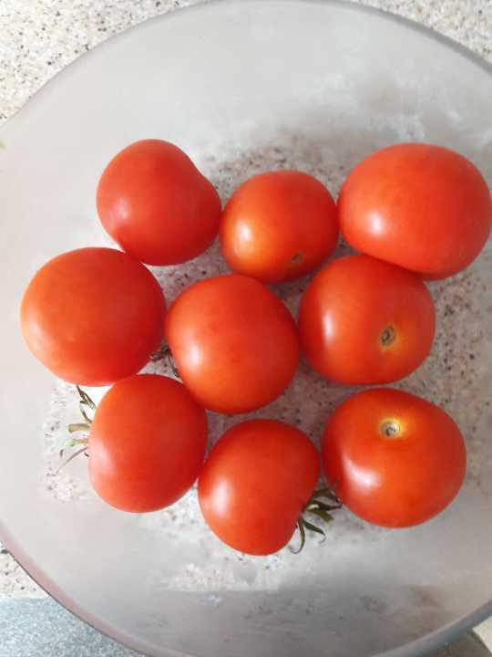 Home grown toms