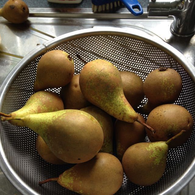 Small ripe Conference pears
