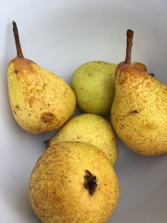 Set of normal 5 pears