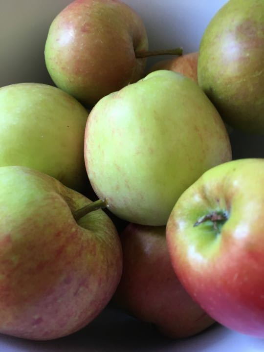 Foraged eating apples various sizes 14 X 1000g bags