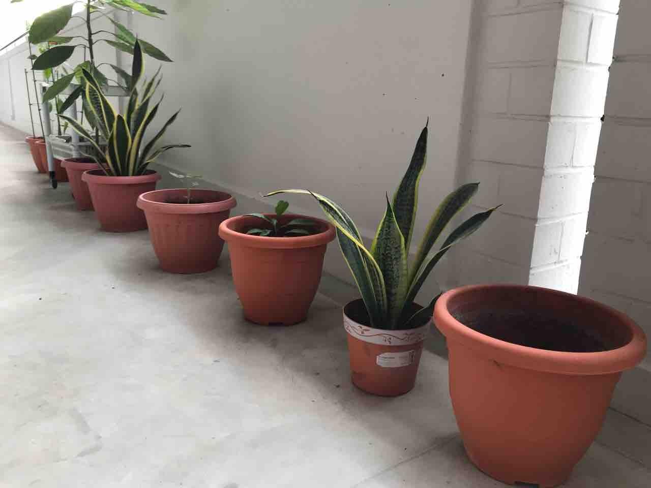 Pots with soil/ plants