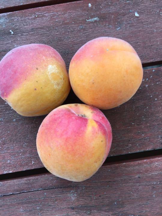 Set of 3 Peaches