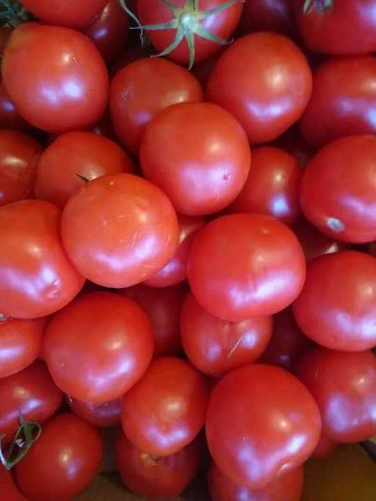 12 kg of Tomatoes