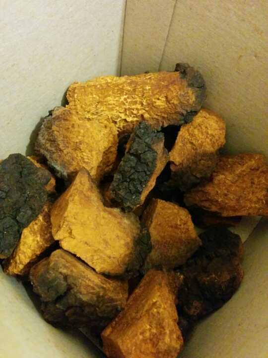 Large chunks of Chaga polypore