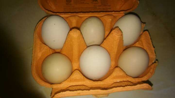 Fresh free range eggs from our happy hens