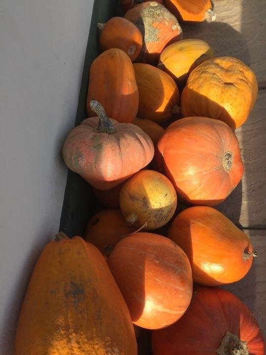 Local pumpkins