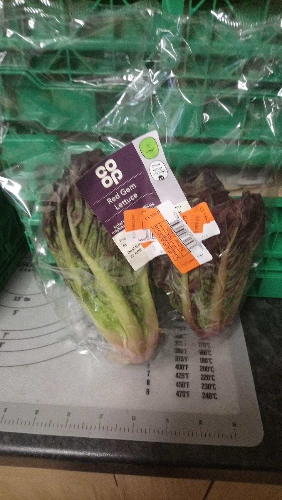 Red gem lettuce