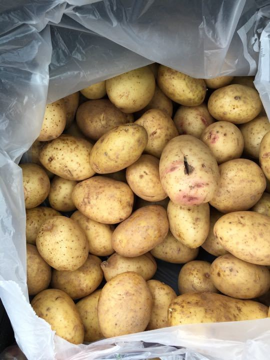 A mountain of potatoes (Request bag 10 or 20)
