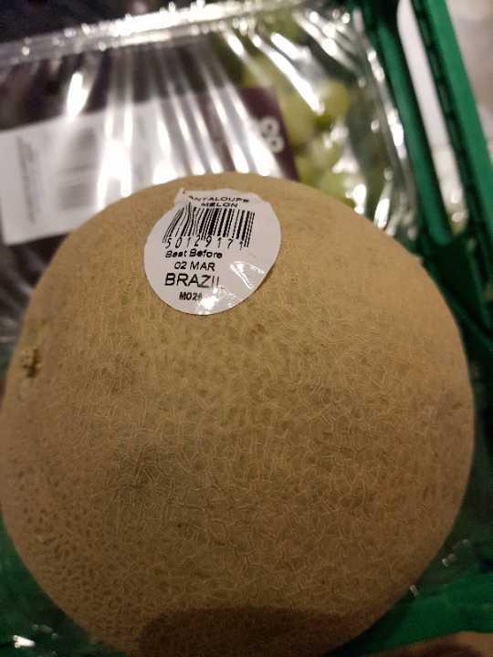 Plenty of Cantaloupe  melons!