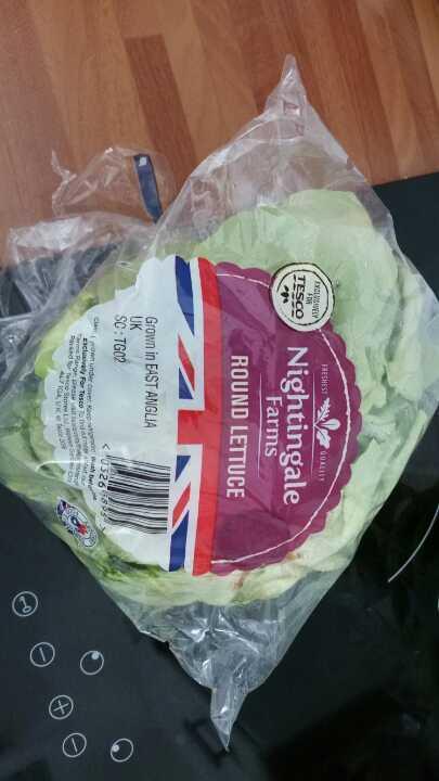 Round lettuce to go today