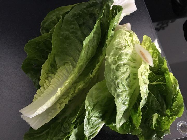 Lettuce  for a pet 🐇