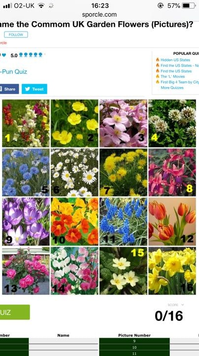 Garden flower seeds / flowers / plants