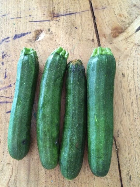 Bag of 4 courgettes x4 One per family