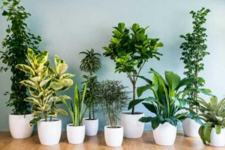 WANTED - Indoor plants