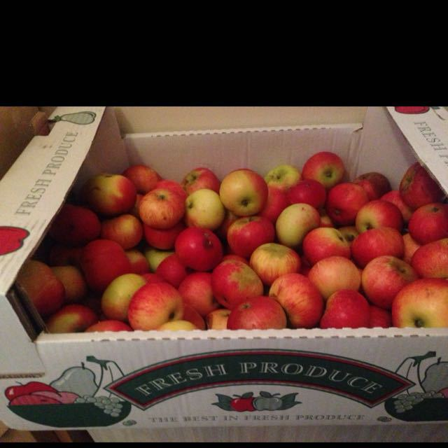 Lovely apples, perfect for school lunches!