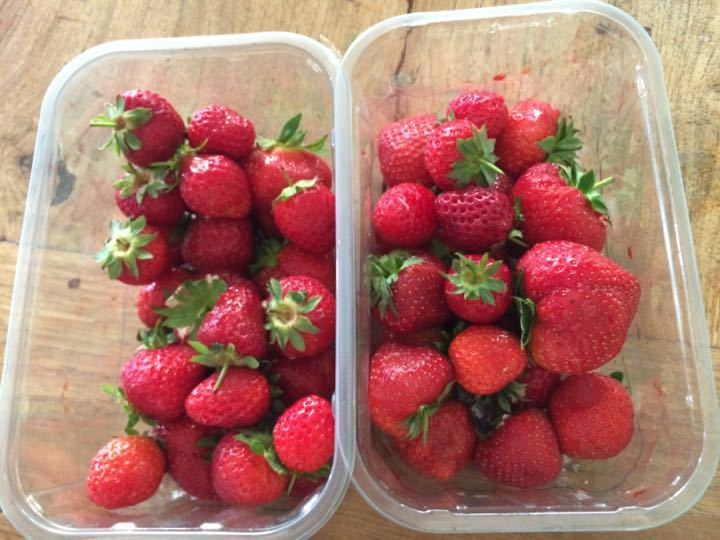 X2 cartons of strawberries