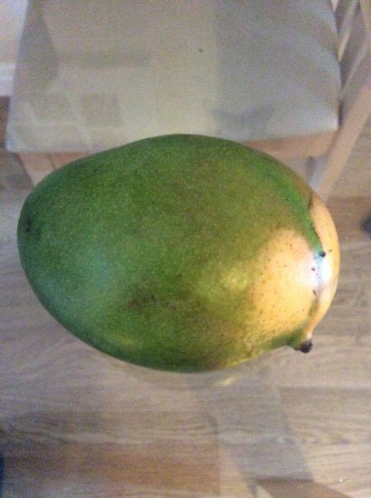 Mango Hardly even ripe yet