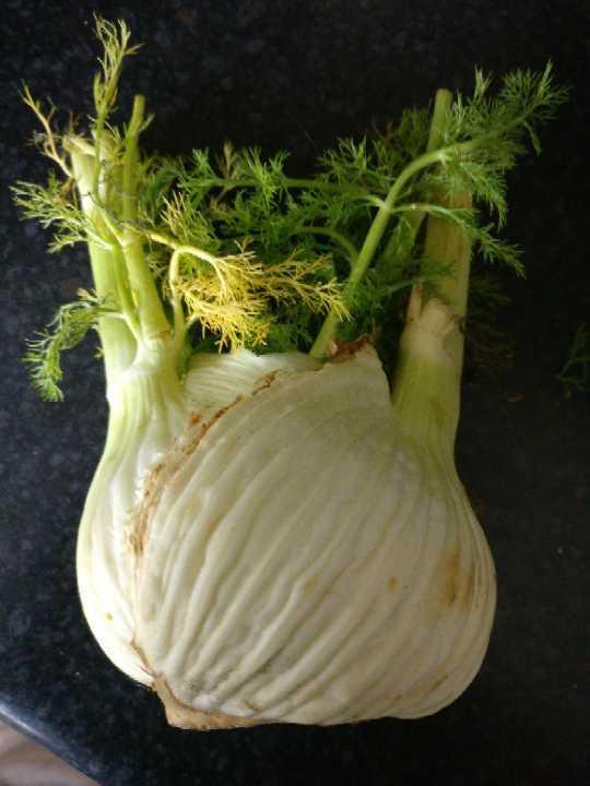 Organic fennel bulb