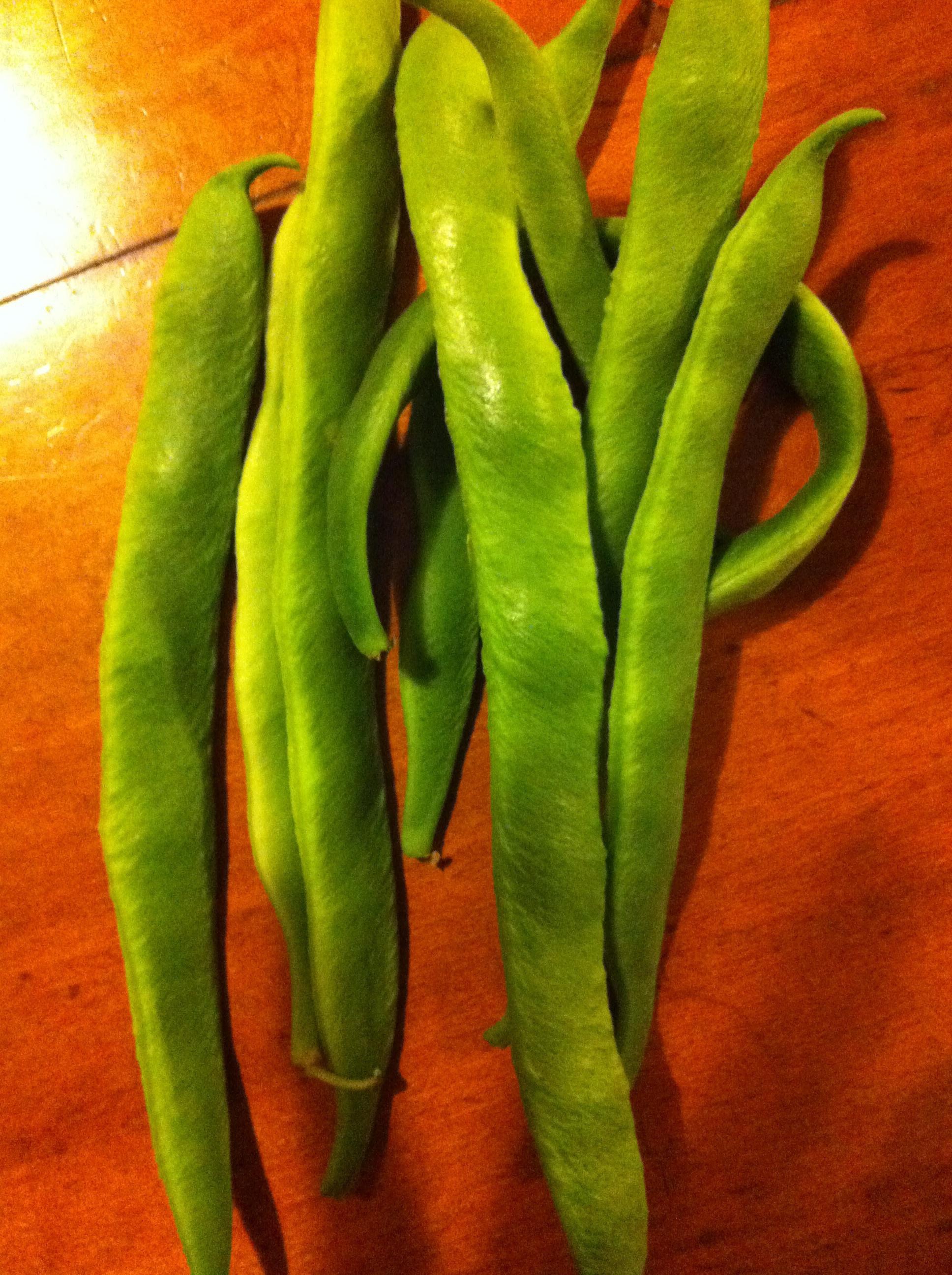 Home-grown runner beans!