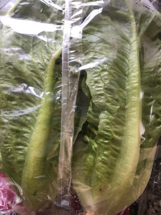 Pack of two gem lettuce