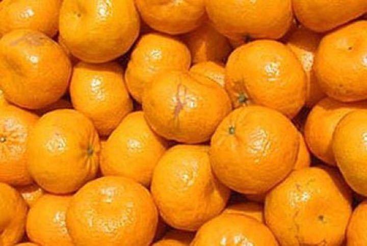 Free Oranges 🍊