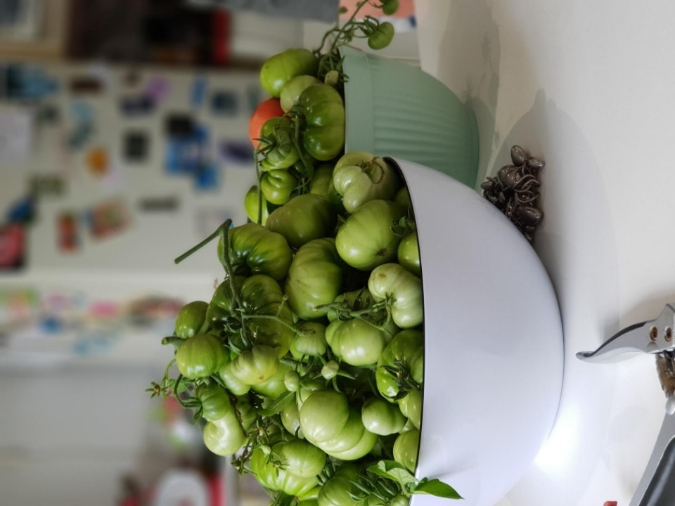 Green tomatoes (home grown)