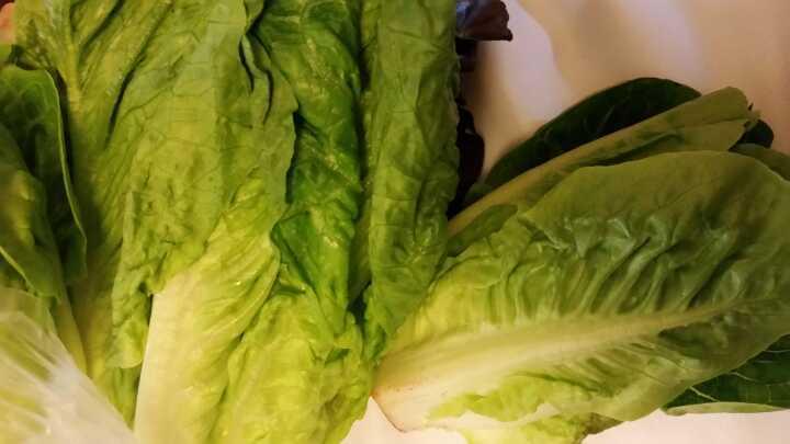 2 Lettuce x4