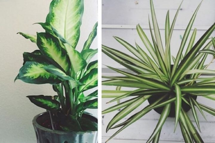 INDOOR PLANTS! Dead or alive. Not really, alive only please.