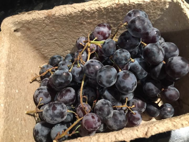 Organic black grapes (with pips)