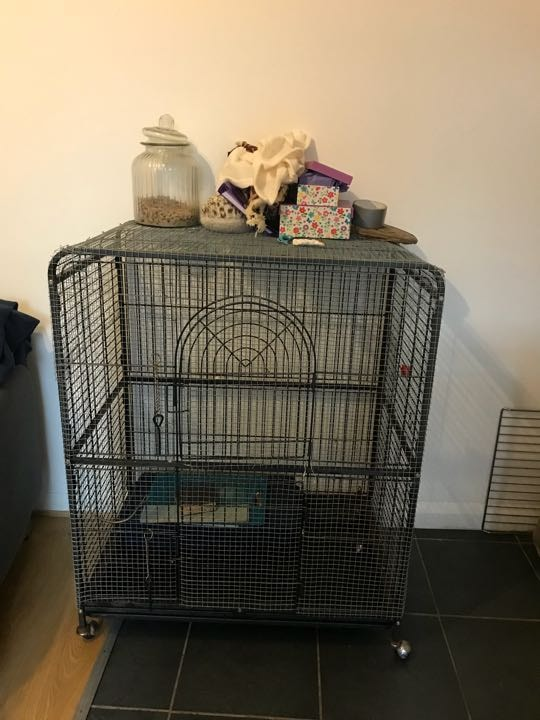 Rat cage, accessories, food and litter