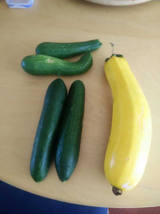Allotment grown cucumbers and courgettes