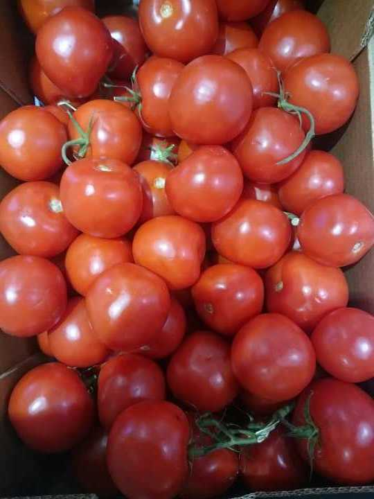 5kg of wonky tomatoes