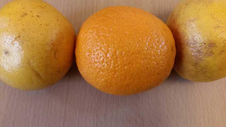 Orange and 2 grapefruit
